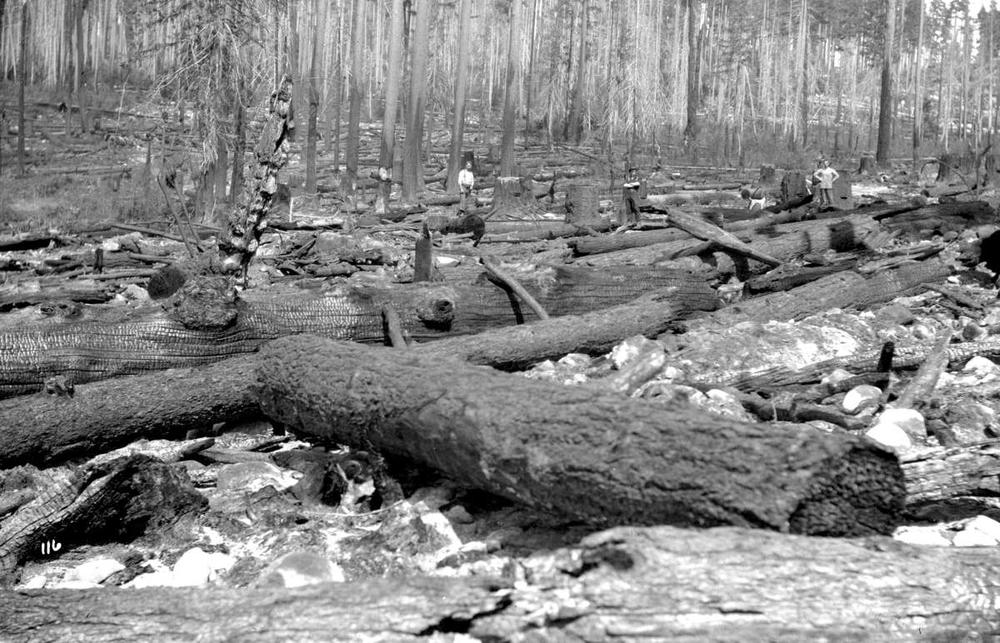 A History of Local Wildfires @ Powell River Public Library