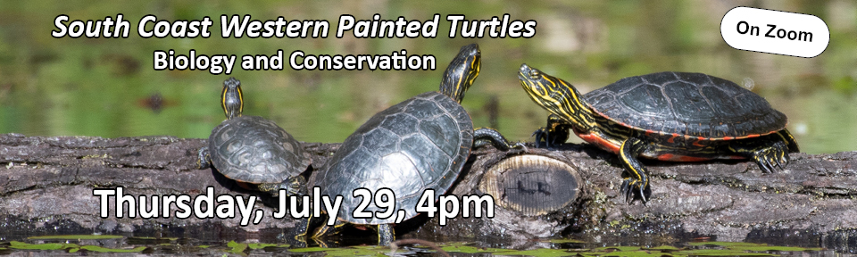 Local Turtles - Biology and Conservation